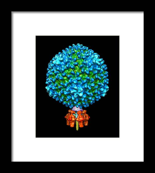 P22 Framed Print featuring the photograph Bacteriophage P22, Computer Model by Gabriel Lander