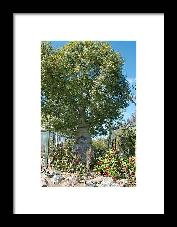 Balboa Park Framed Print featuring the digital art Balboa Tree by Carol Ailles