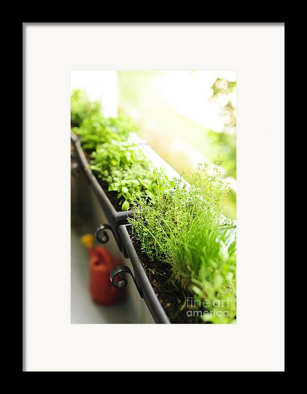Herbs Framed Print featuring the photograph Balcony Herb Garden by Elena Elisseeva
