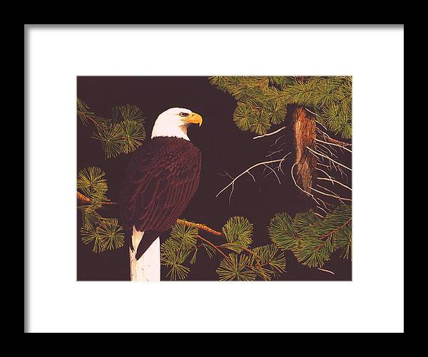 Bald Eagle Framed Print featuring the drawing Bald Eagle by Bill Gehring