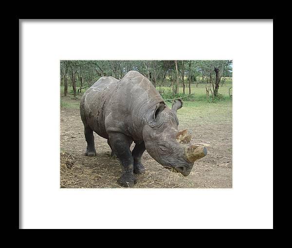 Rhino Framed Print featuring the photograph Baraka by Carol Evans