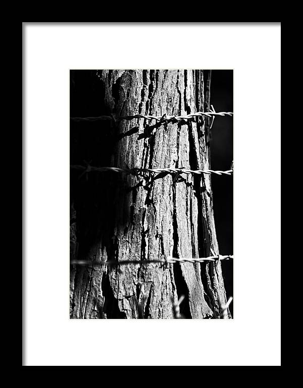 Fence Framed Print featuring the photograph Barbed by Lauri Novak