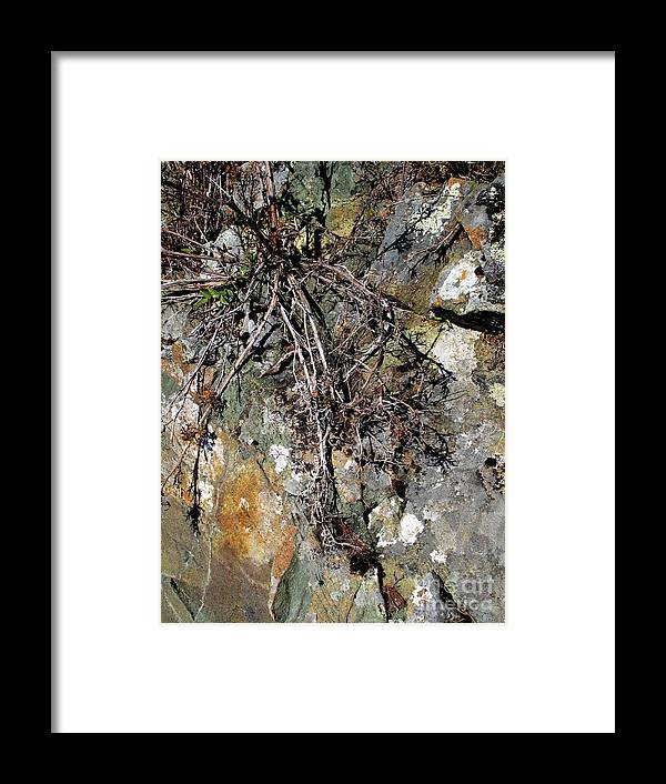 Stone Framed Print featuring the photograph Bare Existence by Louise Peardon