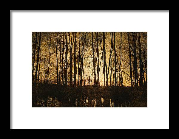 Art Framed Print featuring the photograph Fall Trees On A Lake by Skip Nall