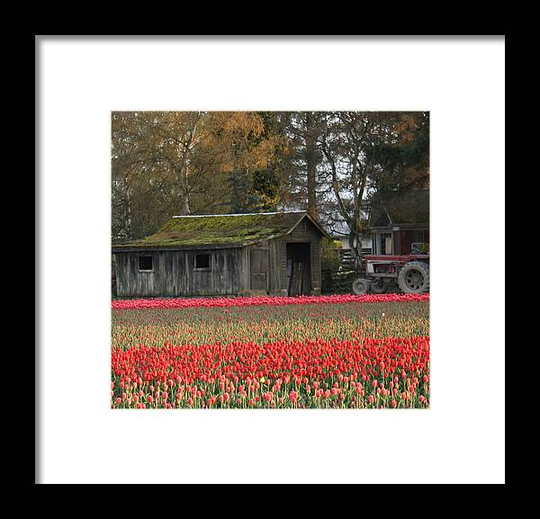 Barn Framed Print featuring the photograph Barn Surrounded By Tulips by Jeannine Welfelt