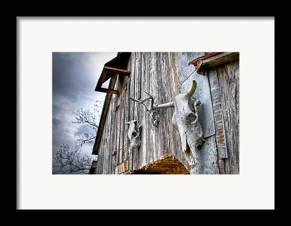 Cow Framed Print featuring the photograph Barnstorm by Pixel Perfect by Michael Moore