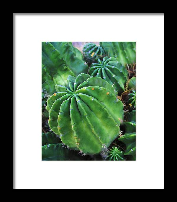 Cactus Framed Print featuring the photograph Barrel by Diane Wood