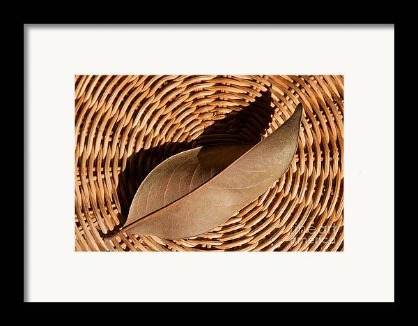Brown Framed Print featuring the photograph Basket Of Brown by Dan Holm