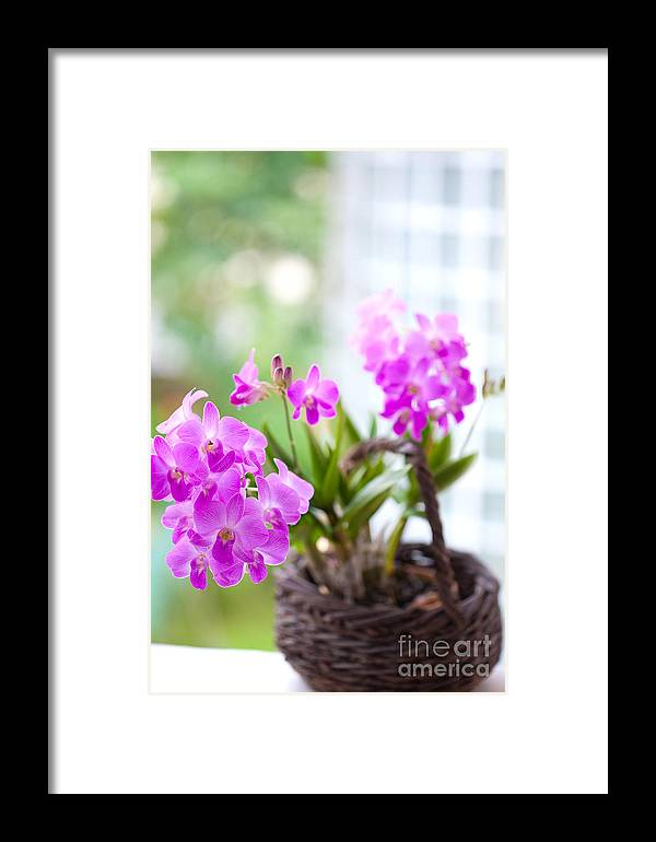 Backgrounds Framed Print featuring the photograph Basket Of Orchids by Juriah Mosin