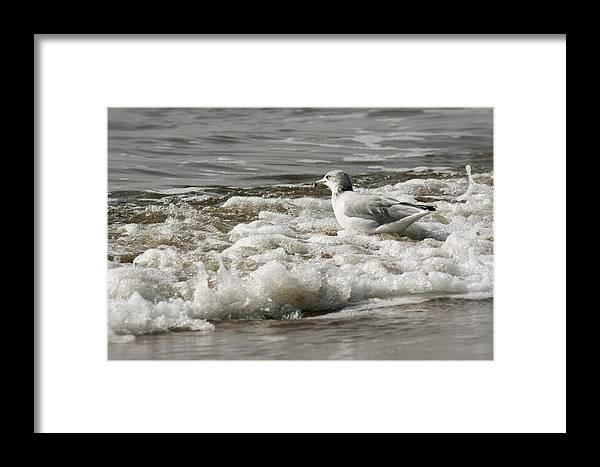 Beach Framed Print featuring the photograph Bathing by Natalija Wortman