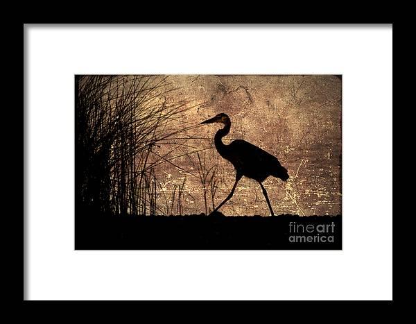 Heron Framed Print featuring the photograph Bayou Walk by Joan McCool