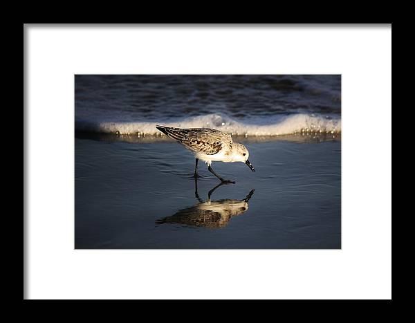 Beach Bird Framed Print featuring the photograph Beach Bird by Paulette Thomas