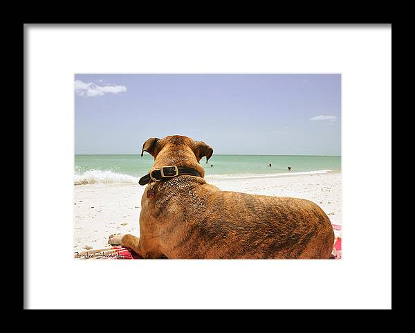 Dog Framed Print featuring the photograph Beach Blanket Tugboat by Christine Stonebridge