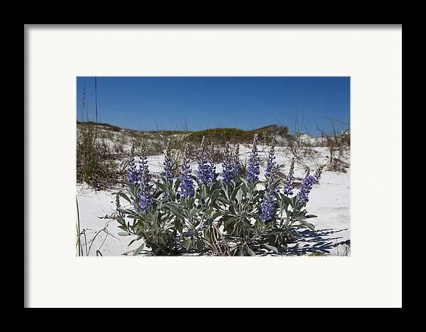 Beach Framed Print featuring the photograph Beach Flora by Charles Warren