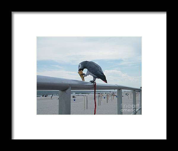 Bird Framed Print featuring the digital art Beach It Parot by Laurence Oliver