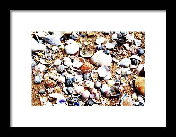 Beach Shells Macro Art Framed Print featuring the photograph Beach Shells by Edgars Gasperovics
