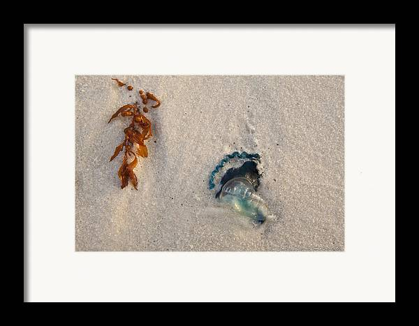 Beach Framed Print featuring the photograph Beached by Charles Warren