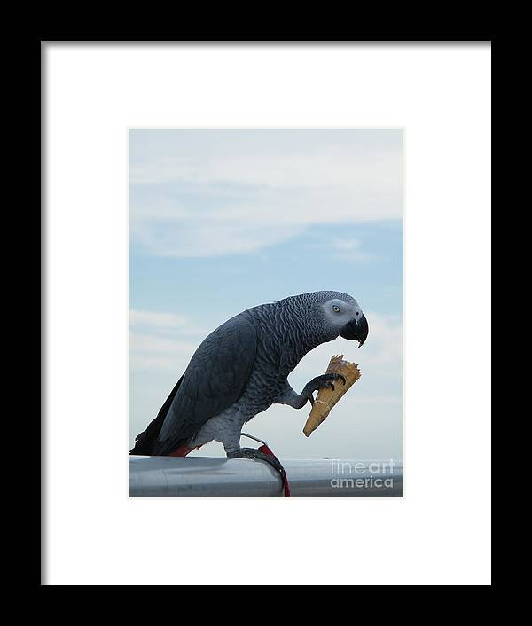 Bird Framed Print featuring the digital art Beaching It Parot by Laurence Oliver