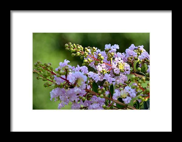 Beaded Framed Print featuring the photograph Beaded Lavender Lace by Maria Urso