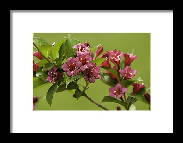 Nature Framed Print featuring the photograph Beautiful Colors by Chad Davis