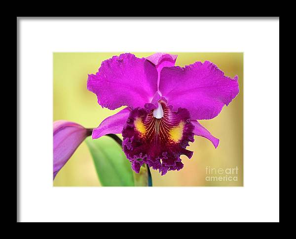 Orchid Framed Print featuring the photograph Beautiful Hot Pink Orchid by Sabrina L Ryan