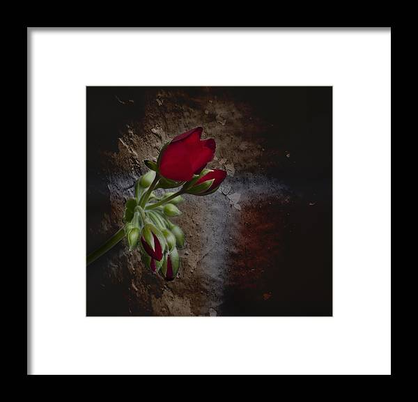 Beauty And The Beast Framed Print featuring the photograph Beauty And The Beast by Robin Webster