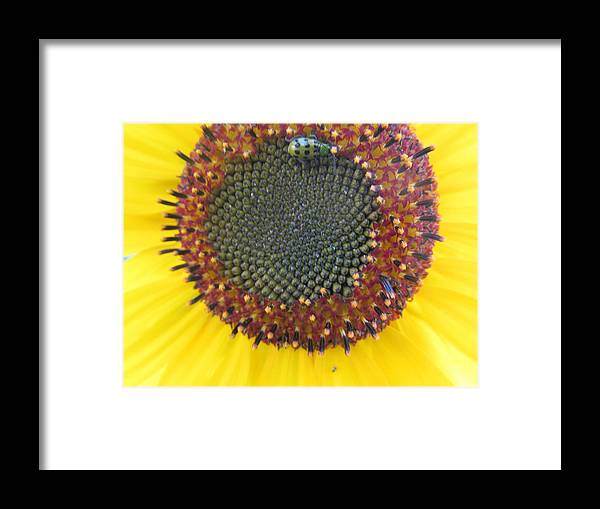Bee Framed Print featuring the photograph Beauty And The Ladybug by Tina M Wenger