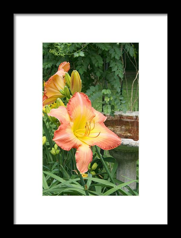 Flower Framed Print featuring the photograph Beauty By The Birdbath by Mike Lytle
