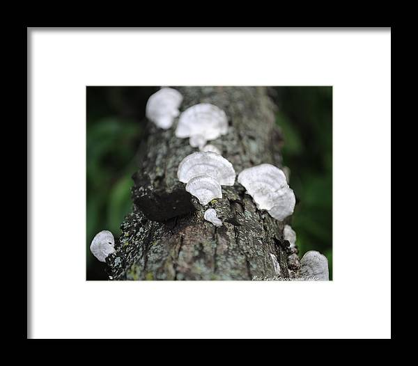 Nature Framed Print featuring the photograph Beauty From Ashes by Linda Tucker