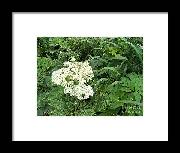 White Flower Framed Print featuring the photograph Beauty by Margie Byrne