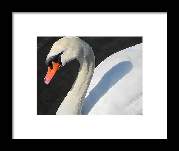 Swan Framed Print featuring the photograph Beauty by Marilyn Wilson
