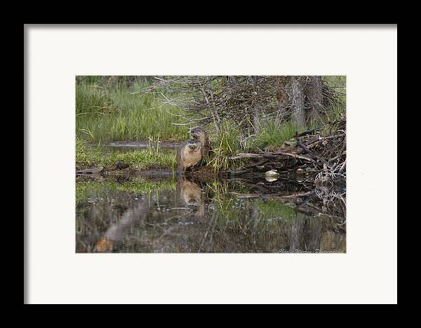 Beaver Framed Print featuring the photograph Beaver Pair by Charles Warren