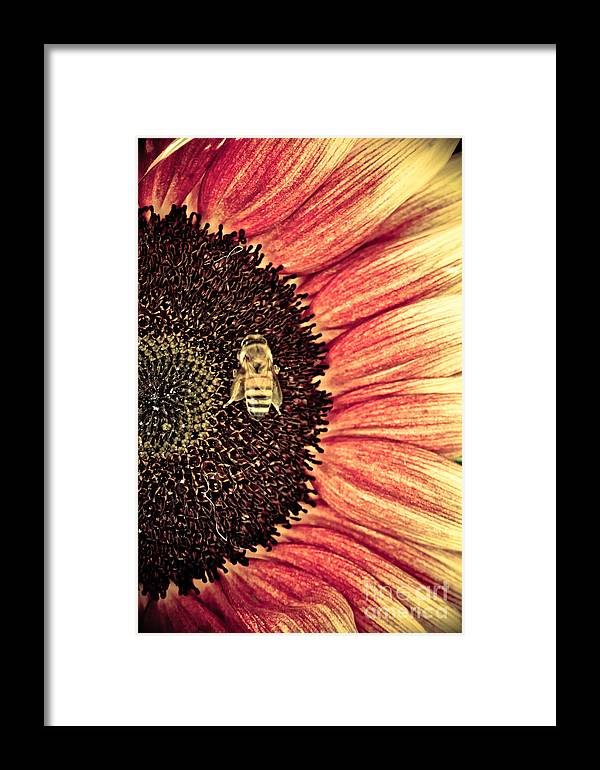 Floral Framed Print featuring the photograph Bee Dazzled by Athena Lin