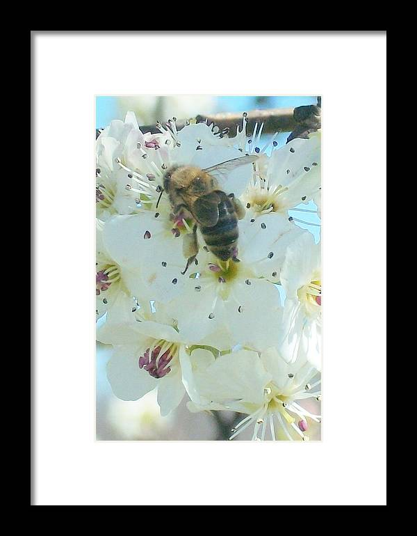 Bees Honey Bees Insects Flowers Garden Trees Ornamentals Framed Print featuring the digital art Bee Nice by Wide Awake Arts