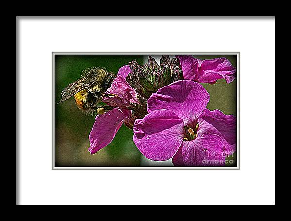 Flowers Framed Print featuring the photograph Bee On A Flower by Dawn Harris