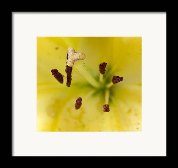 Macro Framed Print featuring the photograph Bees Eye View by Charles Warren