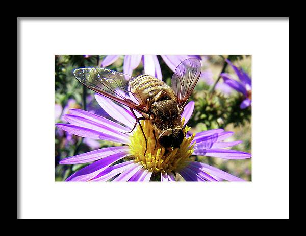 Bees Framed Print featuring the photograph Beeutiful by Randy Thompson