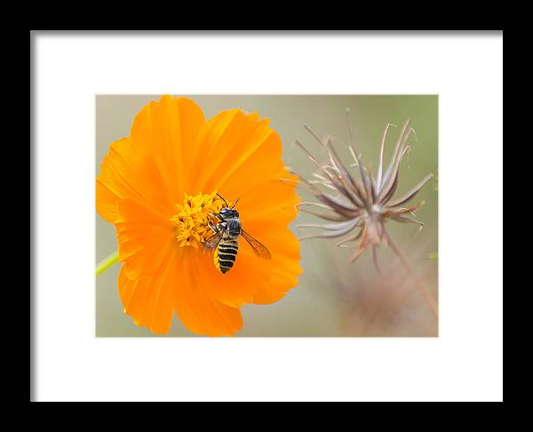 Animal Framed Print featuring the photograph Before It's Too Late by Joab Souza