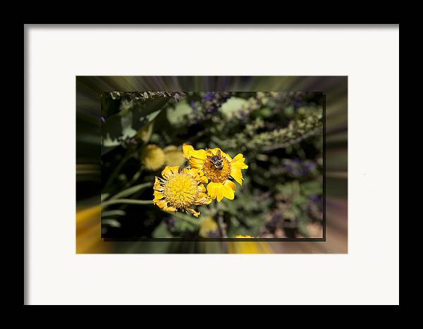 Flower Framed Print featuring the photograph Behave by Charles Warren