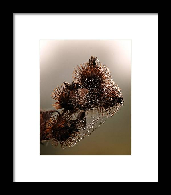 Nature Framed Print featuring the photograph Behind The Veil by Susan Capuano