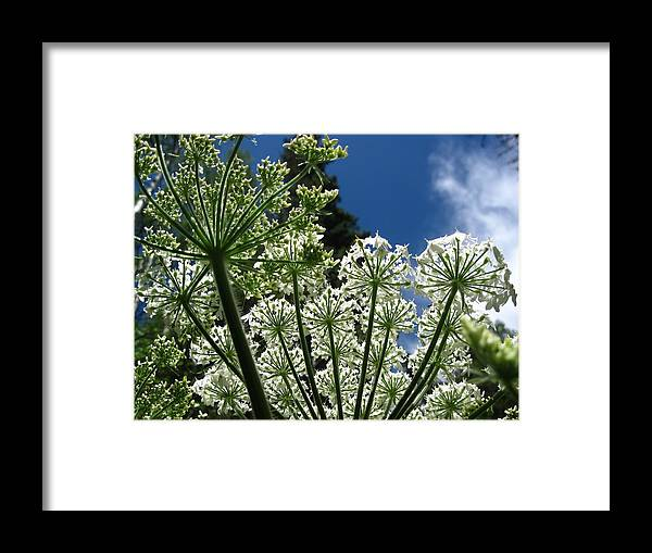 Flowers Framed Print featuring the photograph Below Beauty Orig by Amara Roberts