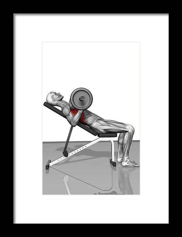 Vertical Framed Print featuring the photograph Bench Press Incline (part 2 Of 2) by MedicalRF.com