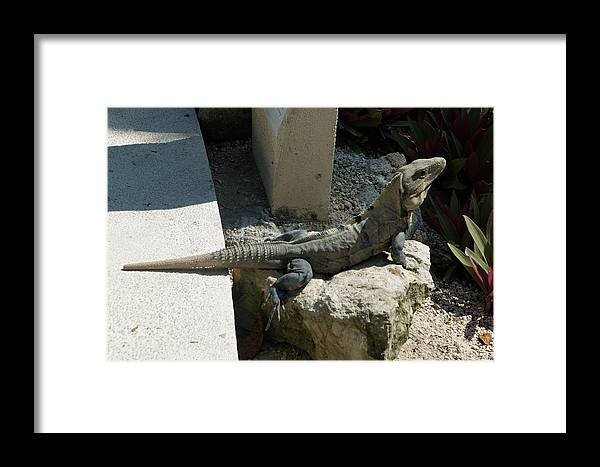 Mexico Framed Print featuring the photograph Between A Rock And A Wall by Barry Doherty