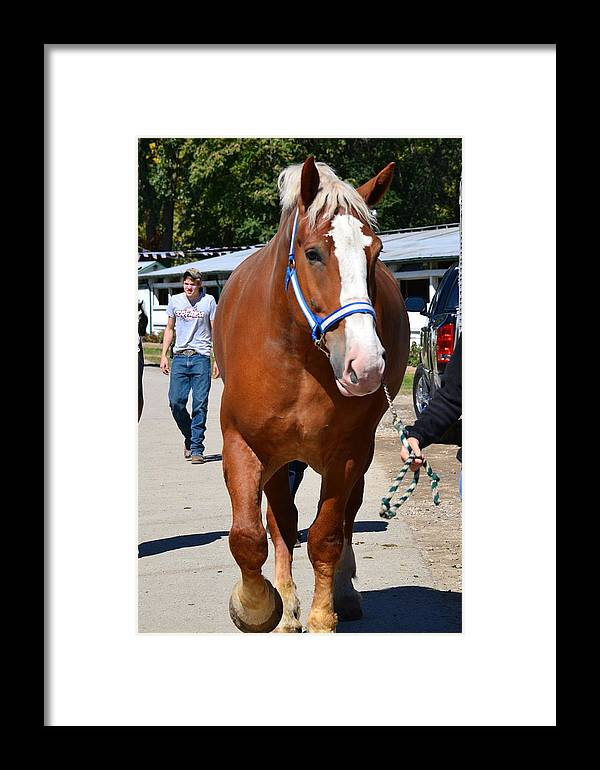 Horse Framed Print featuring the photograph Big Boy by Valarie Davis