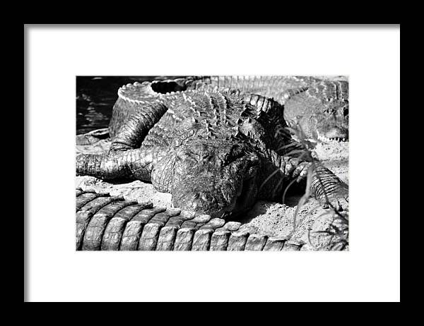 Fine Art Photography Framed Print featuring the photograph Big boys by David Lee Thompson