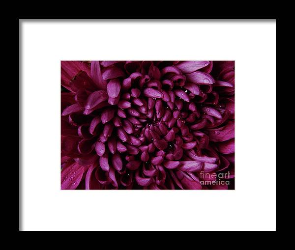 Flower Framed Print featuring the photograph Big Wet Purple by Mark Holbrook