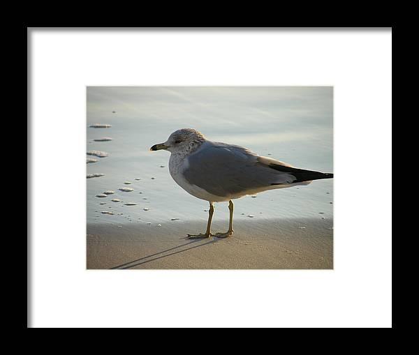 Bird Framed Print featuring the photograph Bird by Carole Janello