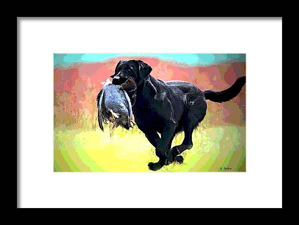 Irish Setter Framed Print featuring the photograph Bird Dog by George Pedro