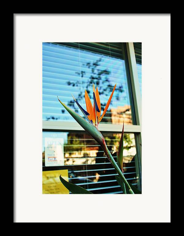 Bird Of Paradise Framed Print featuring the photograph Bird Of Paradise-2 by Todd Sherlock