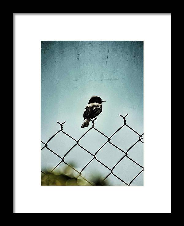 Bird Framed Print featuring the pyrography Bird On A Fence by Chase Hall